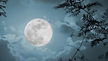 Cảm nhận của em về đoạn thơ sau trong bài thơ Ánh trăng của Nguyễn Duy: Từ hồi về thành phố... đủ cho ta giật mình