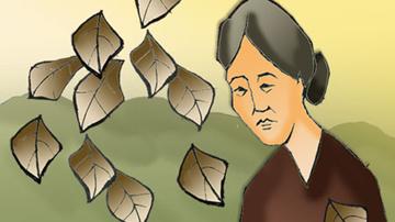 Nêu cảm nghĩ về tình bà cháu trong bài thơ Bếp lửa của Bằng Việt