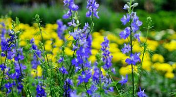 Cảm nhận và suy nghĩ của em về mùa xuân trong bài thơ Mùa xuân nho nhỏ của Thanh Hải